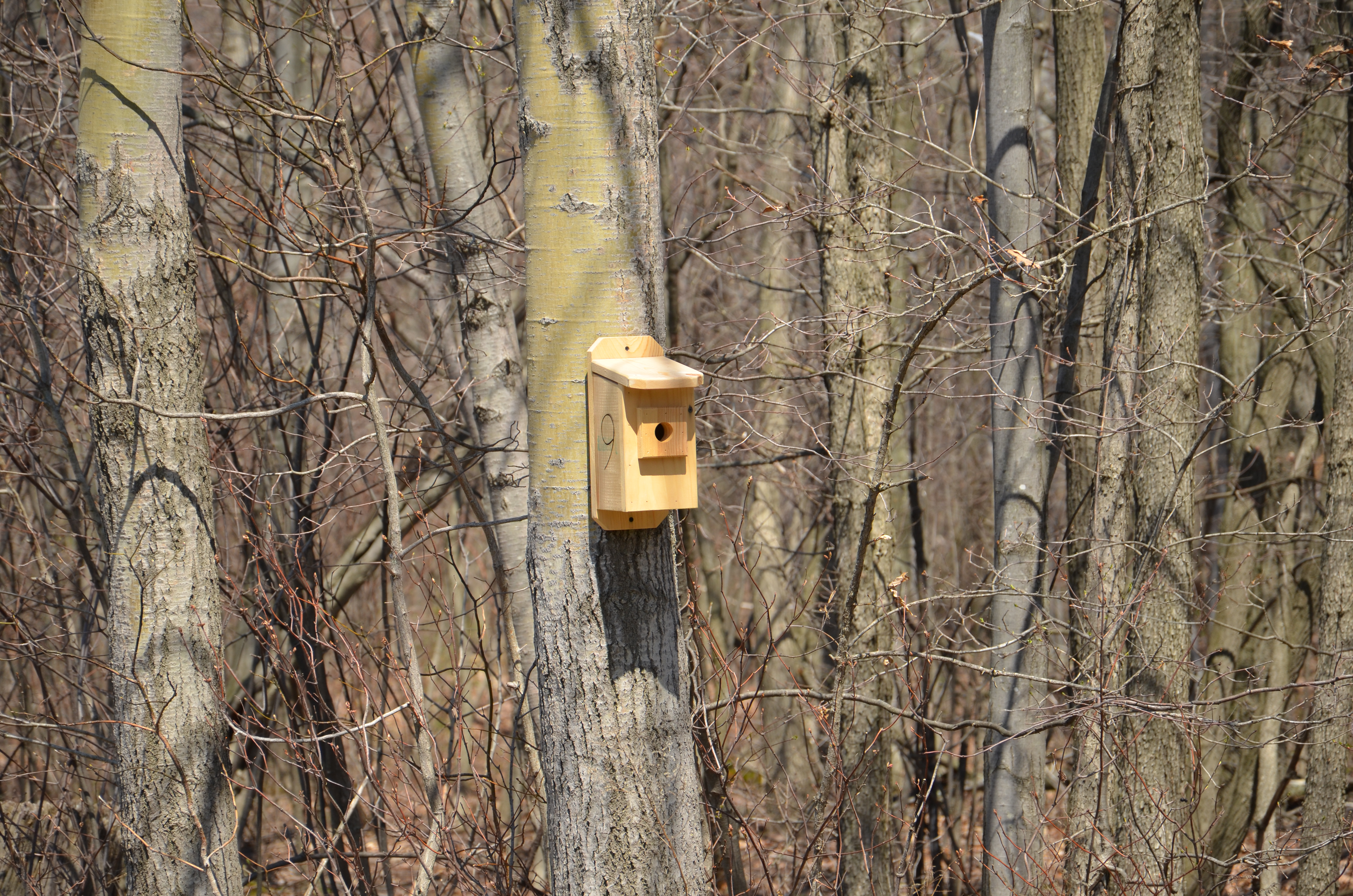Bird House Along Trail